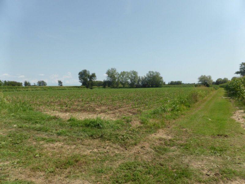Terreno agricolo di 26.630 mq San Vito al Tagliamento